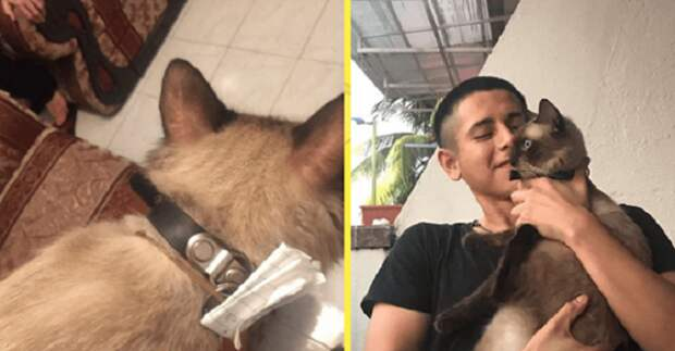 После долгого отсутствия, кошка вернулась домой с запиской, которая была прикреплена к ее ошейнику