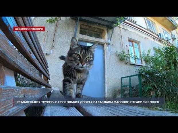 70 маленьких трупов: в нескольких дворах Балаклавы массово отравили кошек