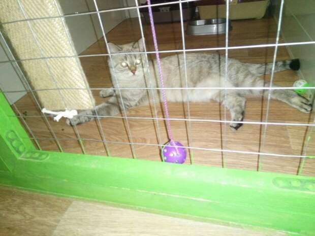 Кошка выпала из окна и не давала никому приближаться к себе балкон, волонтер, двор, кот, кошка, порода, приют