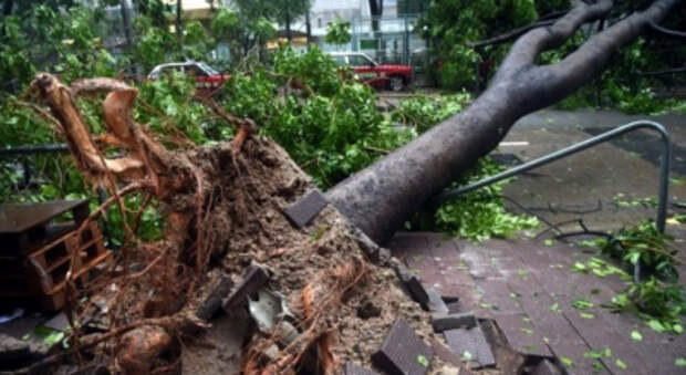 Во время урагана во Львове погибли два человека