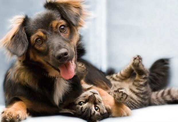 История о дружбе кота и собаки или устрашающие истребители крыс…