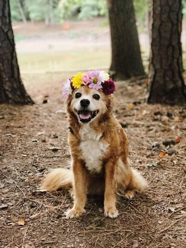 Старенькие животные, в которых очарования больше, чем в весенних цветах