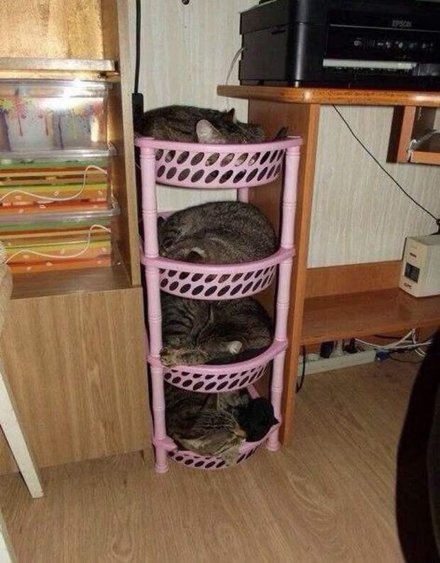 Как организовать котов