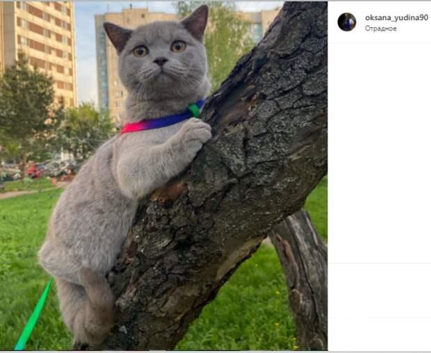 Фото дня: в Отрадном кот вышел на прогулку