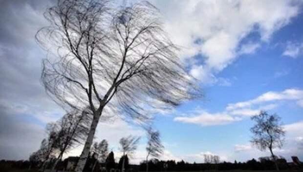 Жителей Подмосковья предупредили о сильном ветре