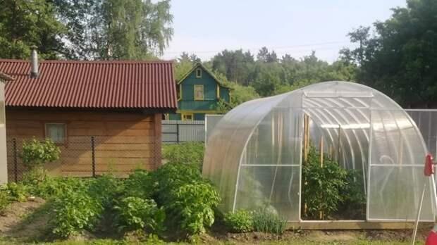 Глава союза дачников уточнил, за какие сорняки оштрафуют садоводов