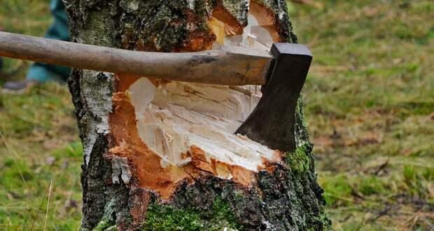 Два жителя Тверской области нарубили елей и сосен на 4 миллиона рублей