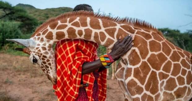 Фотографии диких животных, которые тоже хотят подурачиться и на ручки