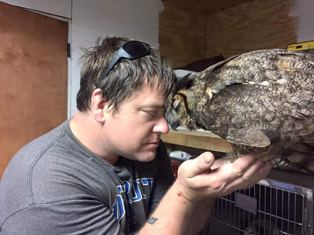 Мисси уже много лет работает с хищными птицами, но такого специалиста, как Поджеки, она еще не встречала животные, объятие, сова, спасение
