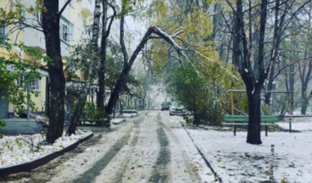 Причину «взбунтовавшихся» деревьев назвали вСтаврополе