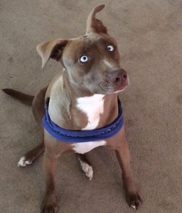 В слепую собаку летели камни… Но впереди ее ждала жизнь, наполненная счастьем!