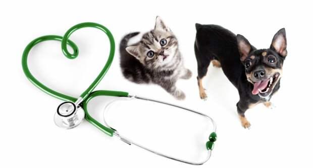 кот собака фонендоскоп