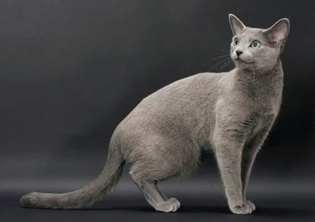 Сколько лет коту по человеческим меркам? Теперь вы будете точно знать ответы на любые вопросы о возрасте! :)