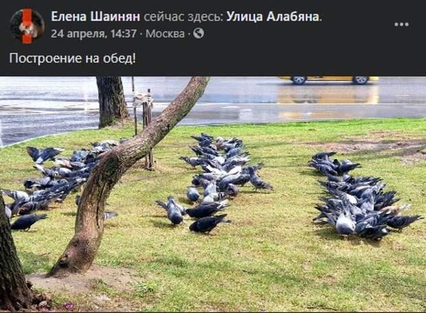 Фото дня: обед у голубей-«солдат» на улице Алабяна