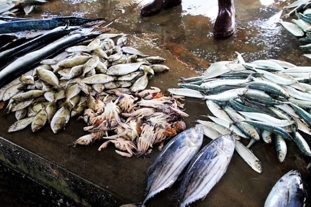В Удмуртии изъяли более 100 кг незаконно пойманной рыбы