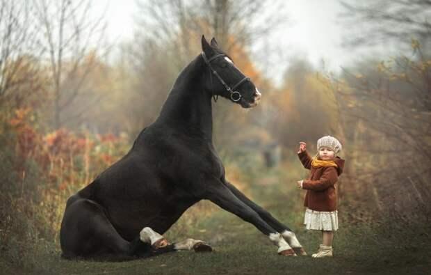 Лошади запоминают человеческие лица.