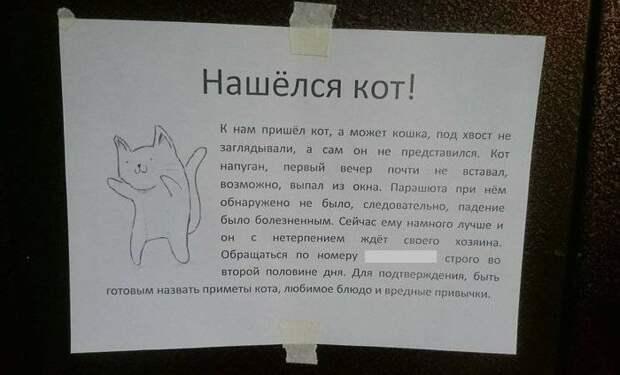 Коты настолько самодостаточны, что для них и про них уже сочиняют объявления: 12 фото