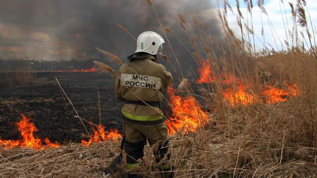 Делать противопожарные полосы на границе своих участков обязали жителей Дона