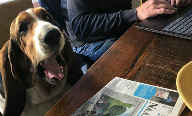 Женщина несколько месяцев возила собаку к кинологу и не догадывалась, что ошиблась дверью