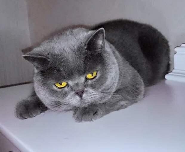 Старый кот - история со счастливым концом