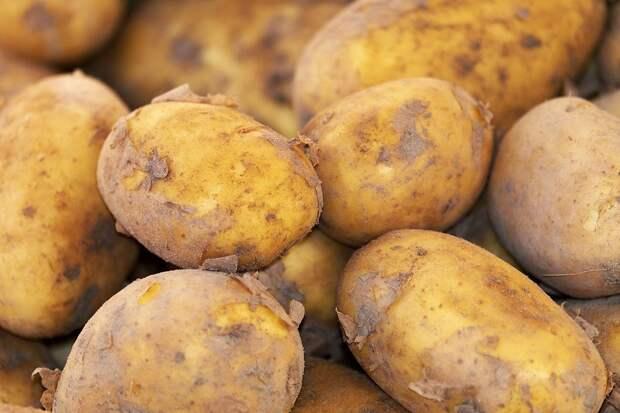 Селекционный центр картофелеводства могут создать Удмуртия и Белоруссия