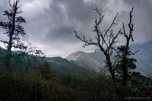 Сок и цвет природы Непала