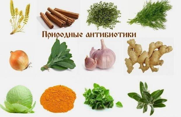 Натуральные антибиотики или синтетические препараты