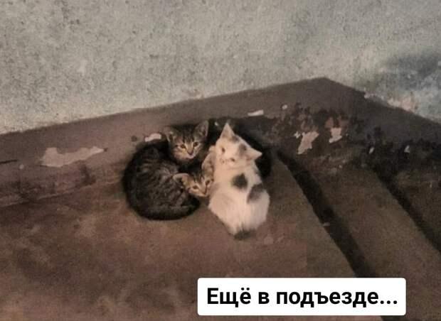 Полосатая банда ищет своих поклонников!)