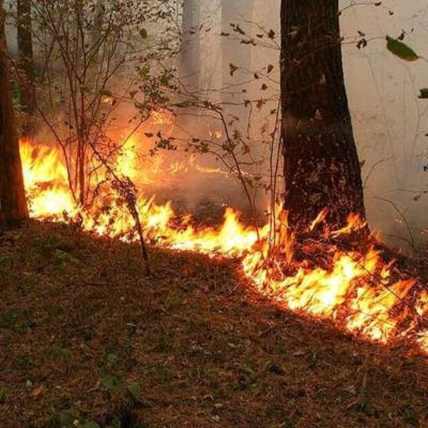 Дым от пожаров на тихоокеанском побережье дошел до атлантического побережья США