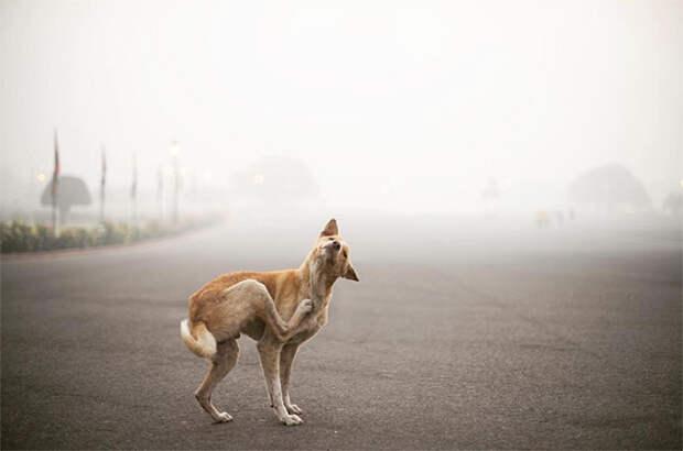 zolotoy chas v fotografii 2