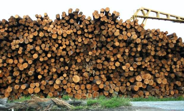 Для стройплощадки больницы в Севастополе вырубят больше 6 000 деревьев