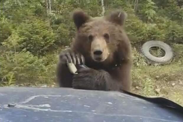 Выпрашивая лакомство, зверь решил отодрать от машины зеркало Фото: стопкадр с видео