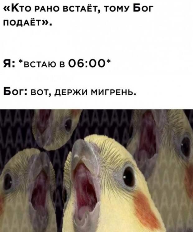 Весёлые