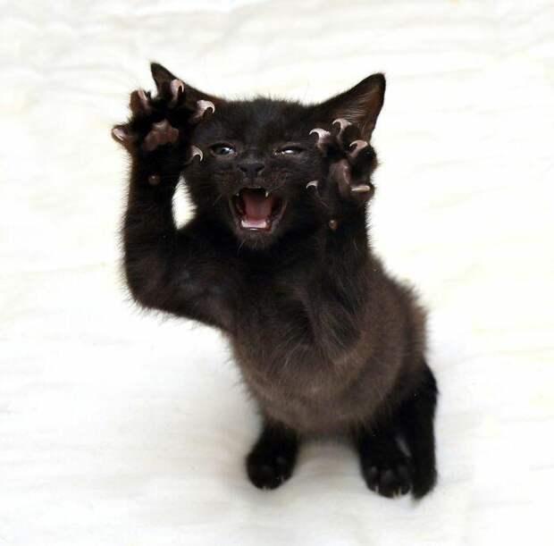 Котики показали, что они не милые киски, а суровые хищники
