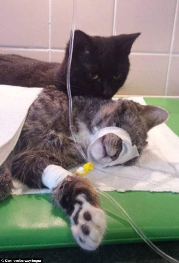 В приюте спасли умирающего кота - а он сам оказался супергероем