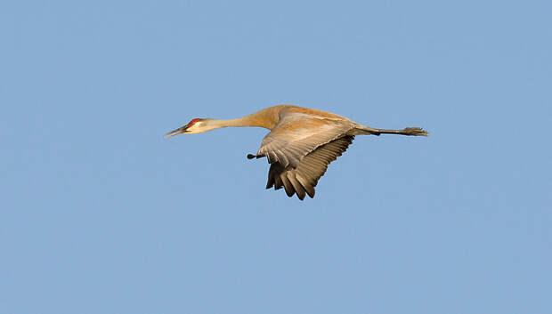Подмосковные птицы стали позже улетать на зимовку из‑за изменения климата