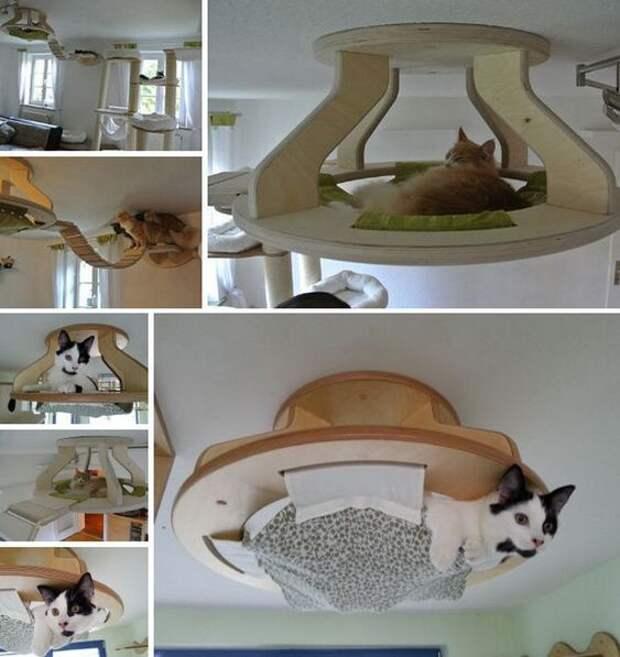 Кот под куполом