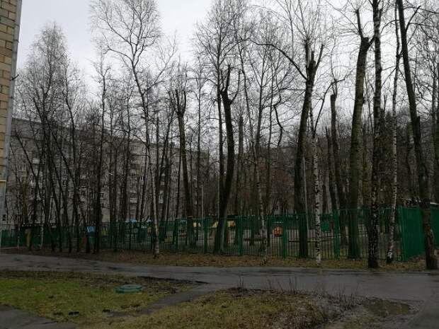 Дожди и до 12 градусов: москвичам рассказали о погоде в начале мая