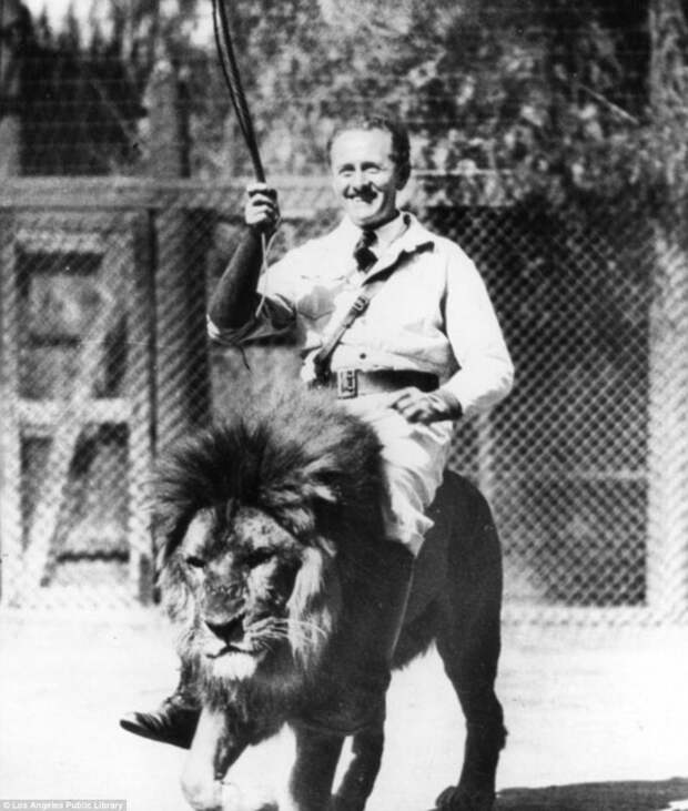 """Знаменитая """"голливудская львиная ферма"""": архивные фотографии 1925 - 1942 гг архивные снимки, архивные фото, дрессированные, дрессировщик, лев, львы, сша"""