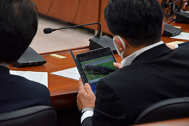 Японский депутат вместо работы смотрит на крокодилов