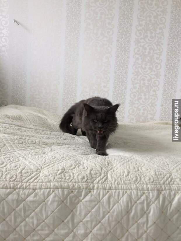 Я только хотела подвинуть его, чтобы лечь на кровать