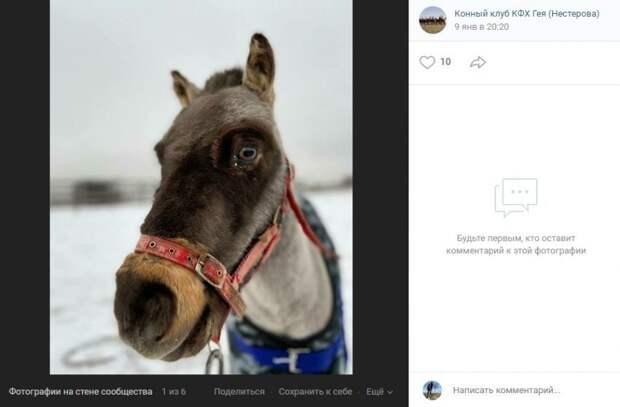 Фото дня: кареглазого пони запечатлели в Бурцеве