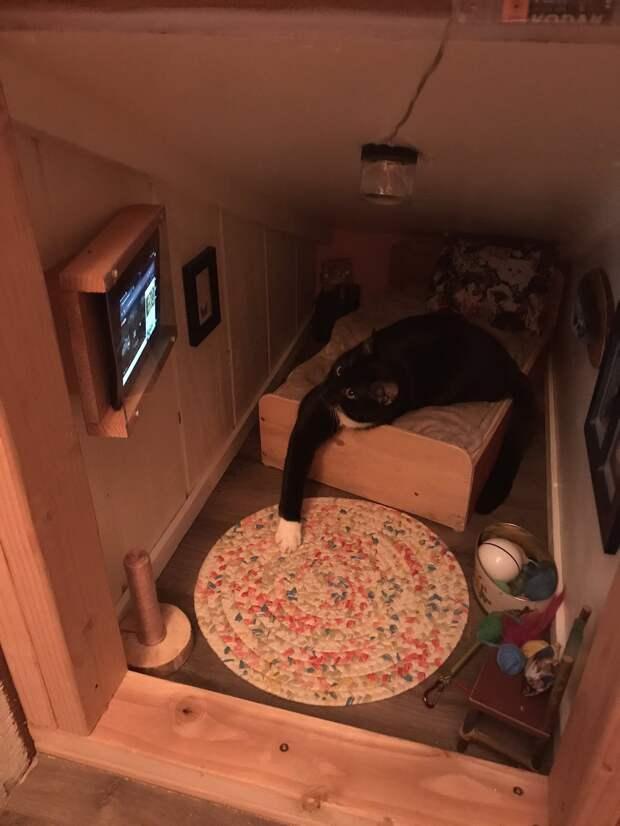 Хозяева сделали для своего кота отдельную комнату. Посмотрите!