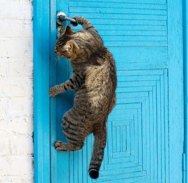 11 научных объяснений, почему мы живем на условиях кошек. А не наоборот.