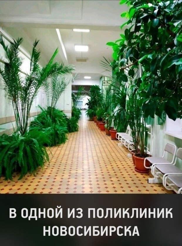 Какая красота! Не поликлиника, а рай!
