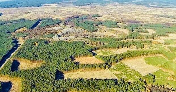 Вывоз леса в Китай предложили освободить от налогов