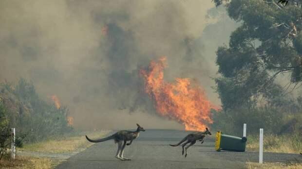 ⚡ 16 жутких фото лесных пожаров Австралии