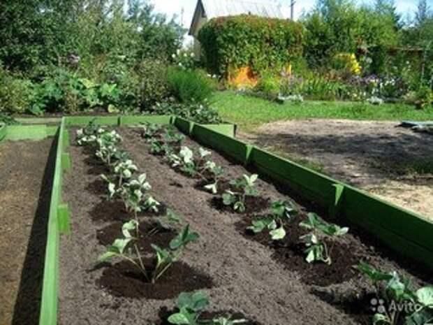 Какой способ посадки лучше и урожайнее! Сажаем клубнику