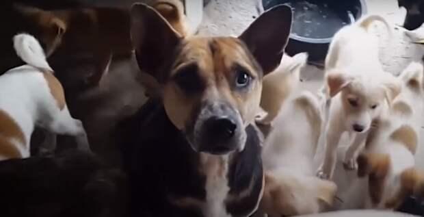 Бедная собачонка скрутилась в узел! Её жизнь напоминала плен – до поры до времени…