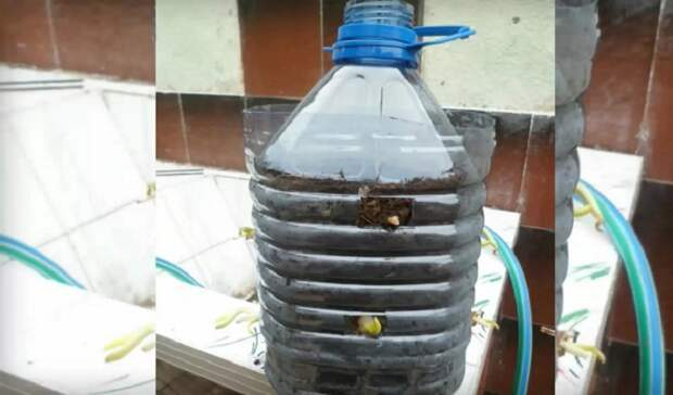 как вырастить зеленый лук в бутылке